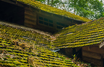 Roof with Algae Buildup