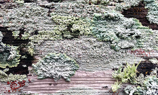 Lichen Growth Removal